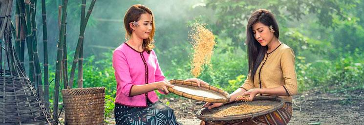 origen del arroz